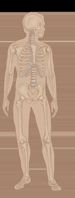 disease-education-understanding-pain-skeleton