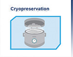 cryopreservation of stem cells